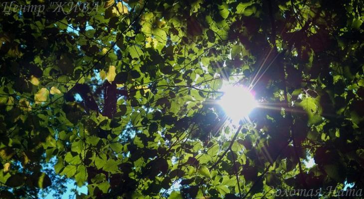 Кружевной лес.