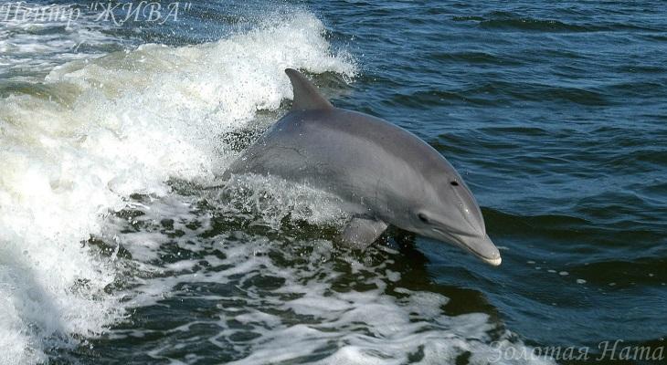 Я и дельфиненок Стас. Целительная Музыка.