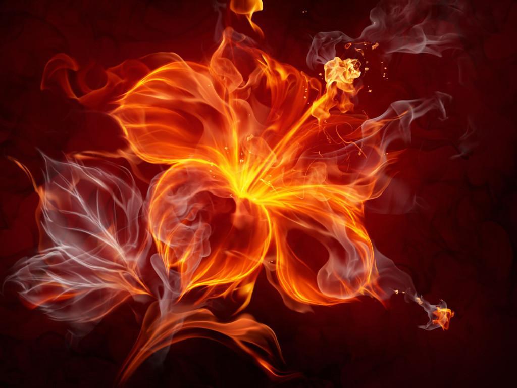 Огненных цветов