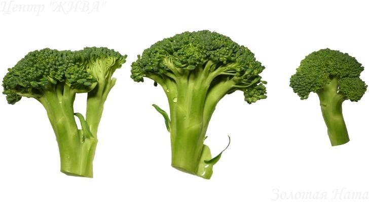 5 продуктов для ускорения метаболизма. Брокколи.