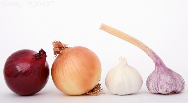 5 продуктов для ускорения метаболизма. Лук и чеснок.