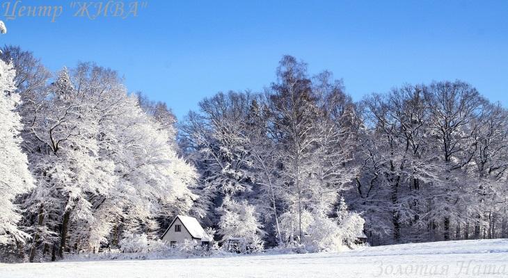 Январский день. Прогулки на природе.
