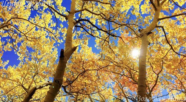 Сияющая Осень.