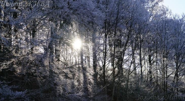 Чудо-деревья.
