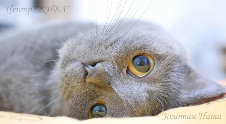 Валерианка для Души. Кот