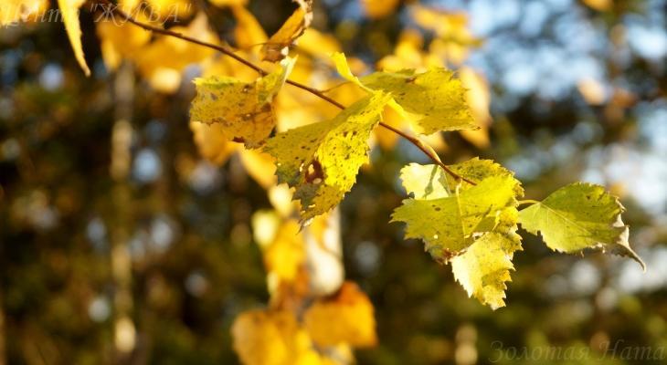Осенний бал 2