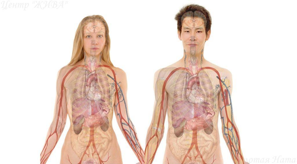 Сканирование и исцеление органов и систем