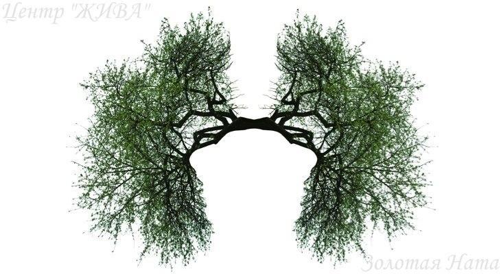 Здоровье. Дыхательная система